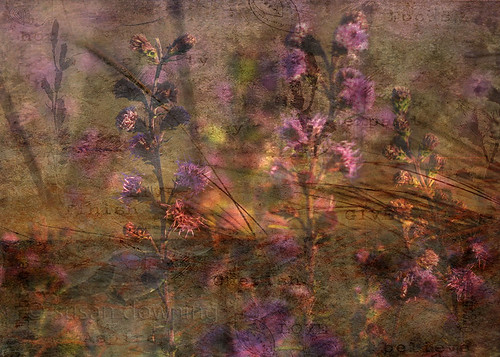 Purple Flowers textured
