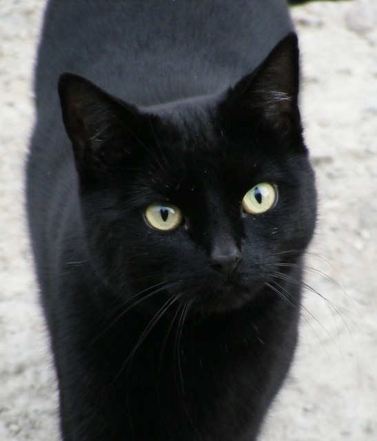 Cat Pussy Cat Black Teens 61