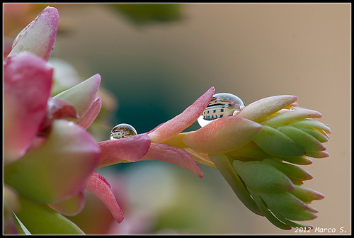 Water Drops by Vietto