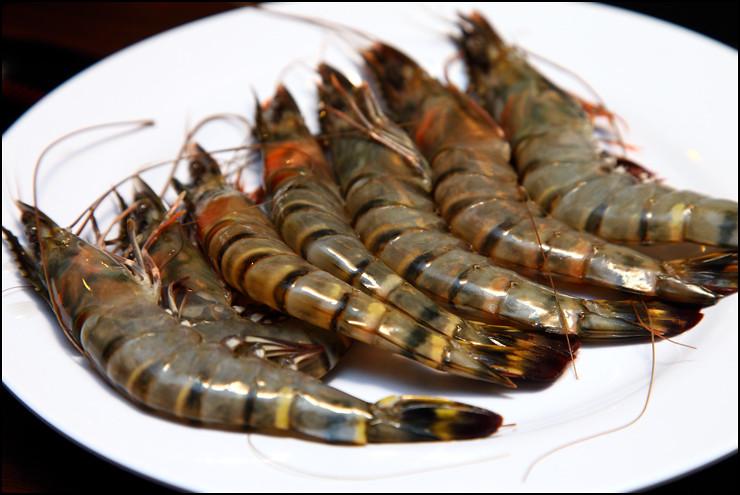 tiger-prawns