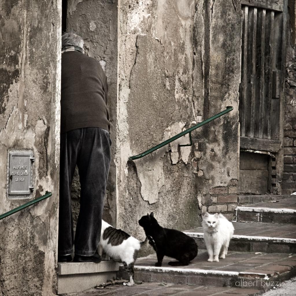 l'home dels gats