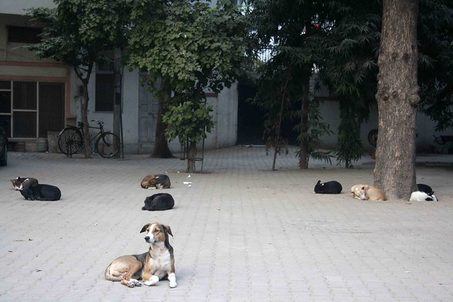 City Living - Stray Dog Feeding Sites, Around Town