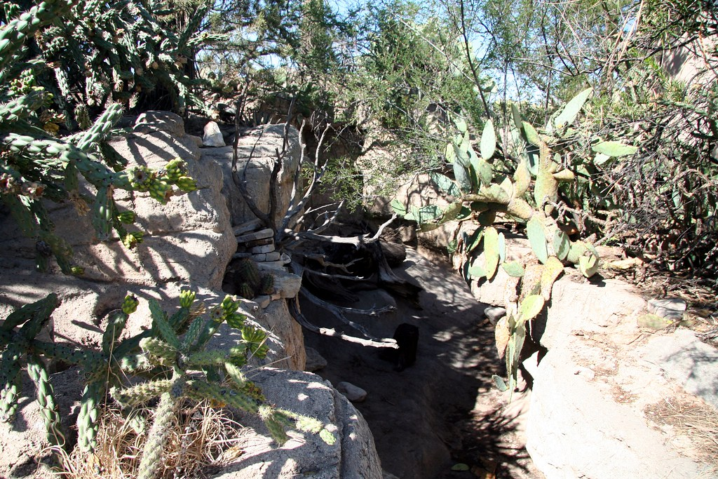 Living Desert Zoo And Gardens State Park Visit Carlsbad New Mexico