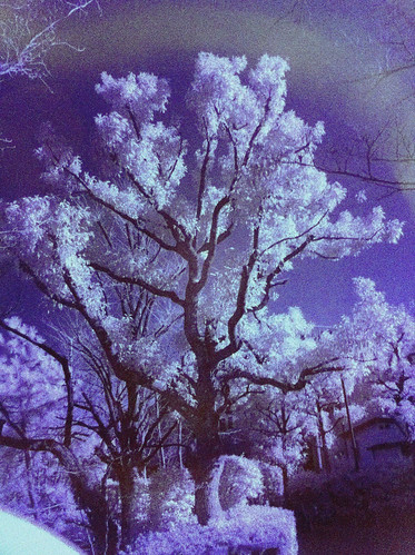 iPhone infrared #7