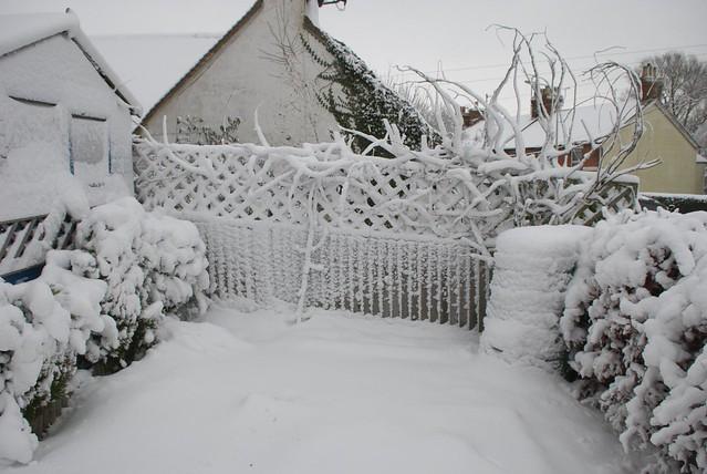 snow in rye DSC_3248_1