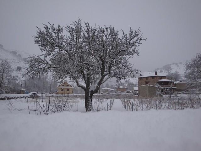 nieve18