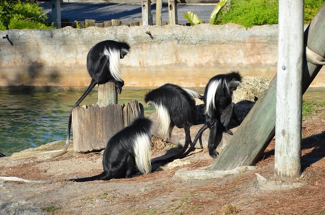 Lowry Park Zoo 1-29-12 032