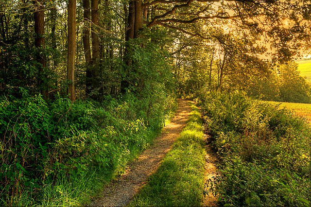 SUNNY PATH in the WOODS