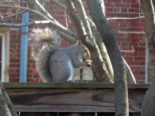 Nuts (02)