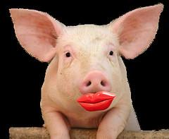 lipstick-on-pig