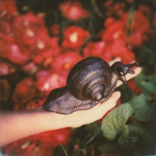 savage snail