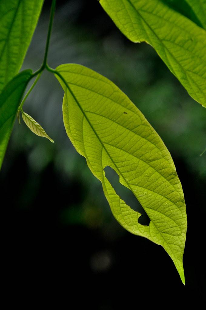 Let nature take care of itself 让大自然自己照顾自己 ...