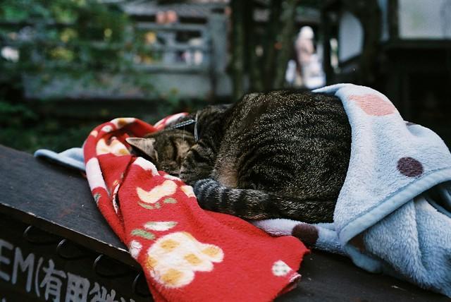 睡得好香甜