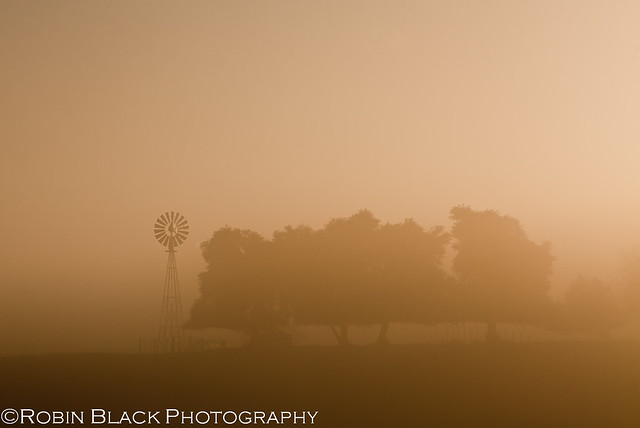 Windmill and Fog at Sunrise, Sierra Nevada Foothills