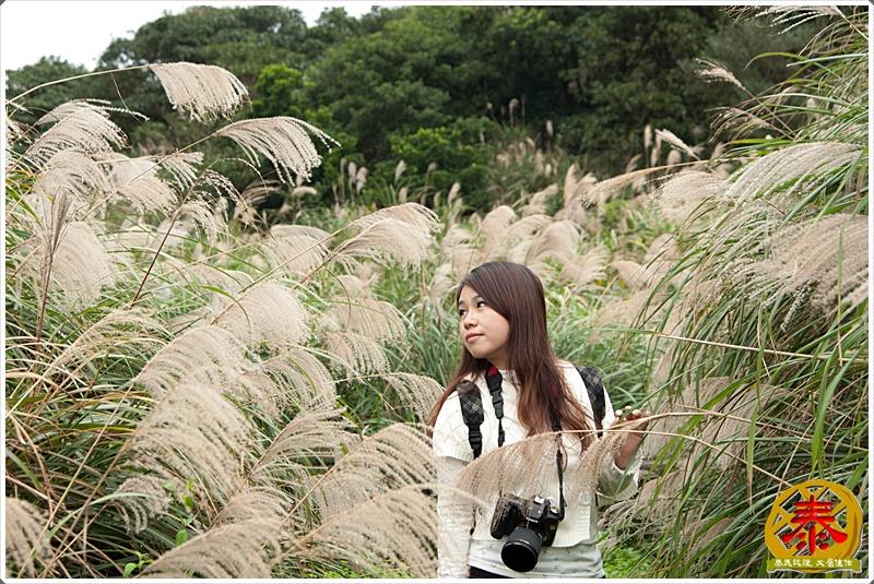 2011.11.26 - 陽明山秋芒-18