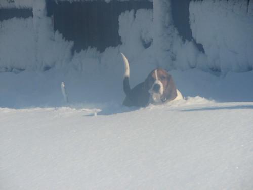 Snow Storm 11-29-11 6