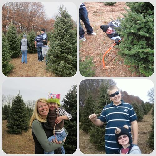 treeday