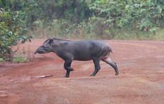 Guyana-8998