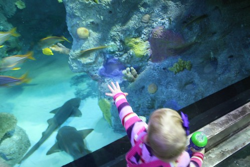 Peanut Butter and Poptarts: Grapevine Sea Life Aquarium