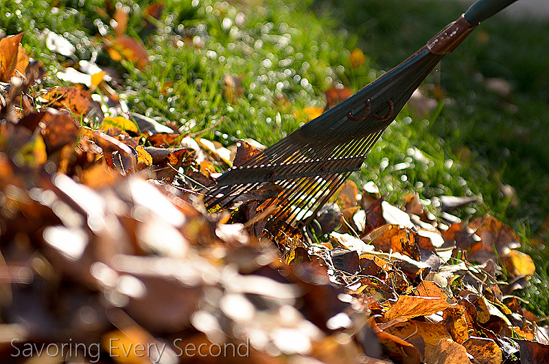 Fall Leaves8-Edit.jpg