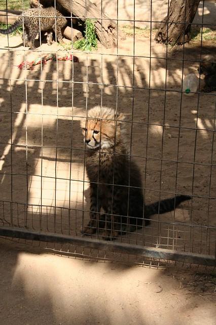 Cango Wildlife Ranch 6