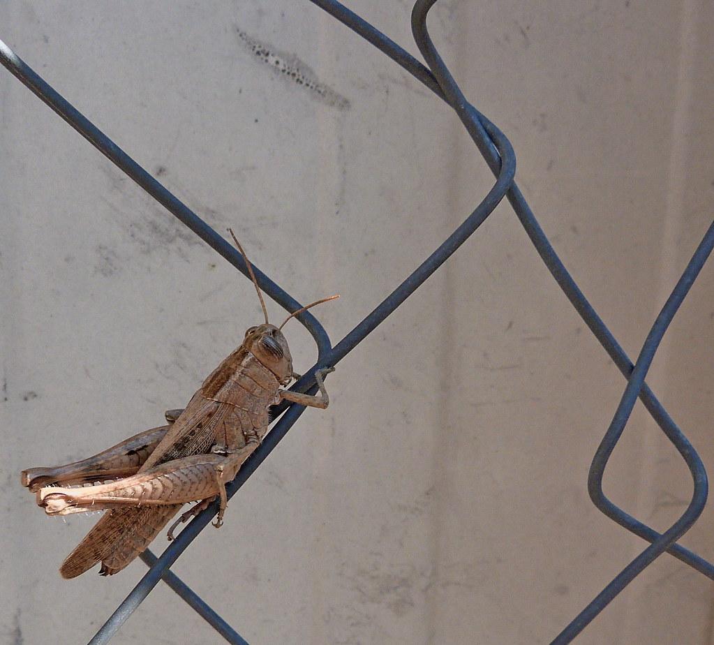 23-11-2011-grasshopper