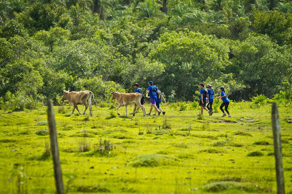 Los participantes de la categoría Trekking 10km se adentran en el bosque con la insólita compañía de unas vacas que estaban marchando en la misma dirección. (Tetsu Espósito)