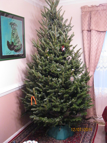 12/7/11: The tree is finally up.  Undecorated, but up!