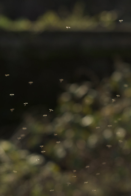december bugs