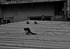 Boy Cat Roof Turkey