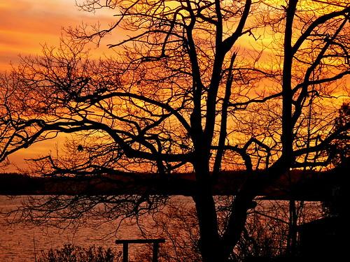 trees winter sunset nature maine