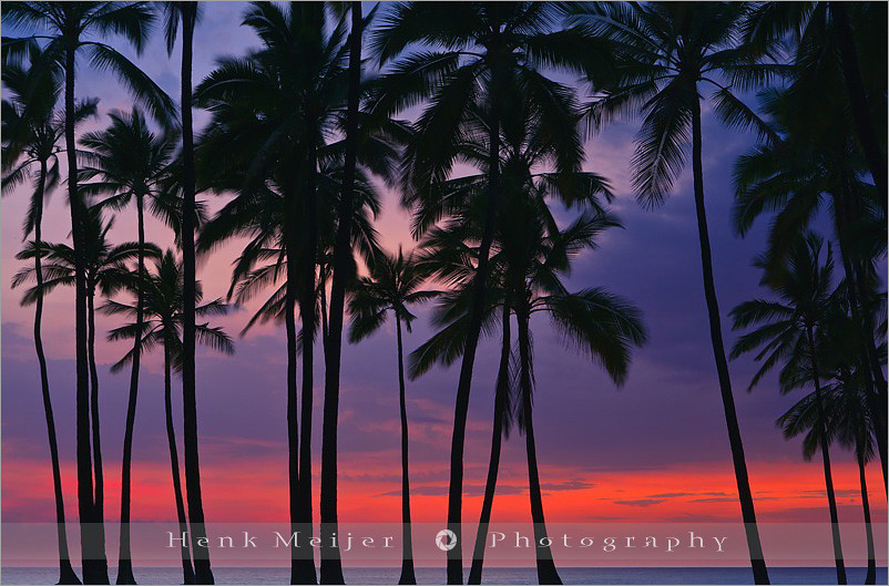 Palms at Sunset - Hawaii