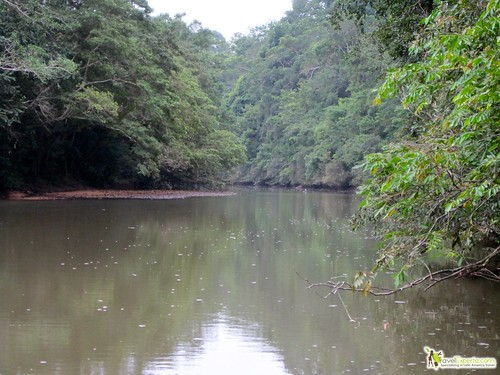 macal river jungle and rain forest of belize