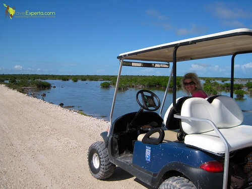 golf cart tour along the mangroves of  ambergris caye in belize