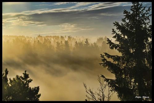 morning mist fog sunrise finland sunrisesunset vesi usva sumu aamu auringonnousu huittinen puurijärvi