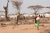 Houses of Dadaab