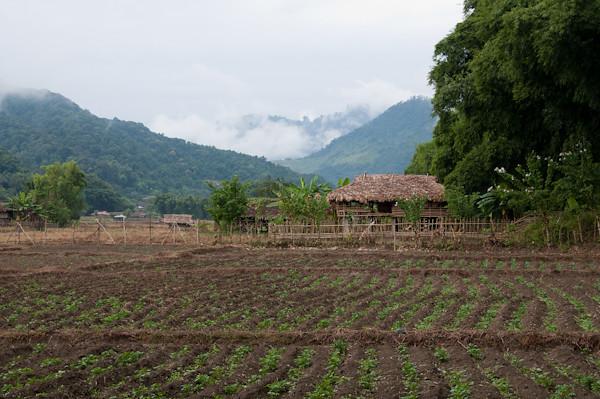 Casas de bambu en la aldea de kabu, en Arunachal Pradesh, India