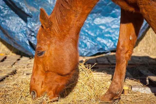 Horses 9751