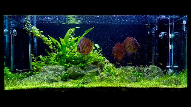 350L Aquarium