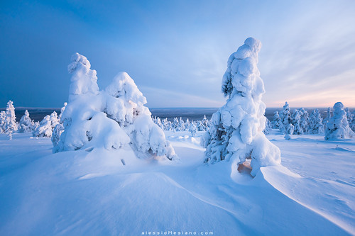 trees winter snow nature finland landscape frozen lapland scandinavia