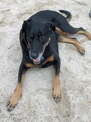 DogPark_Lola_82111b