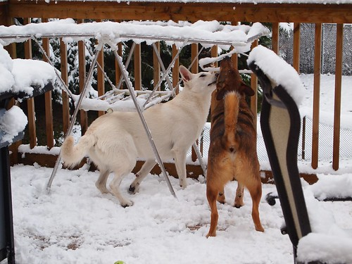 snow tastes especially good licked from  a coat hanger