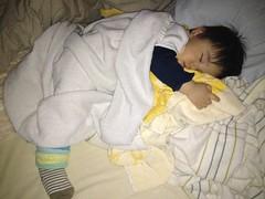 お昼食べたらコテンと寝ました (2011/12/30)