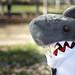 Ed Shark - Park by Ed Shark