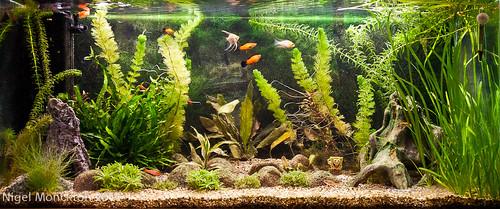 1000/685: 28 Dec 2011: Aquarium - again by nmonckton