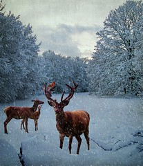 Oh, Deer! It's a Winter Wonderland! ♥