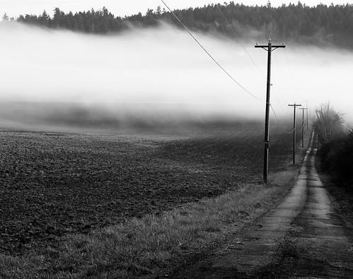 road bw mist nature landscape evening lowlight bc farm vancouverisland treeline