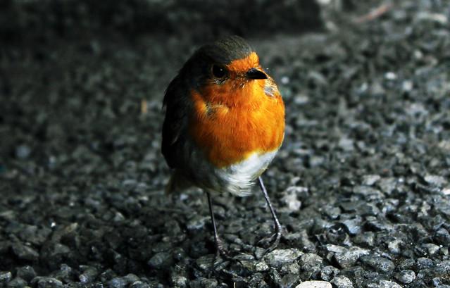 0261 - Ireland, Dublin