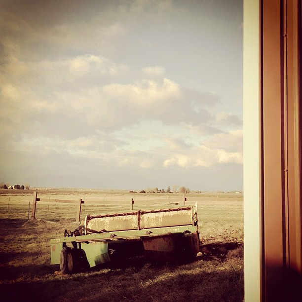 Longing Look #prairie #farm