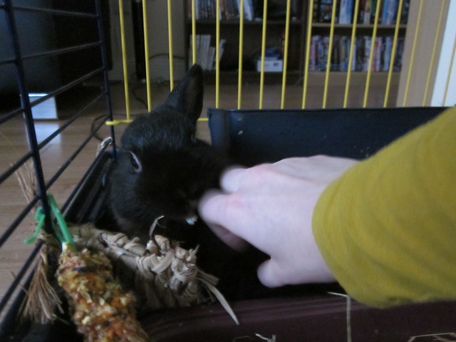 how to take care of a dwarf bunny